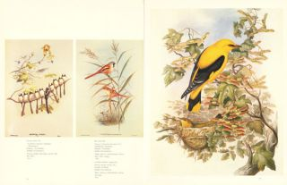 John Gould's Birds [of Great Britain].