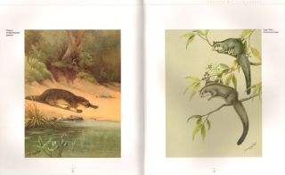 Cayley and son: the life and art of Neville Henry Cayley and Neville William Cayley.