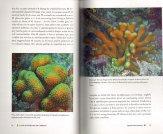 Corals of Florida and the Caribbean.