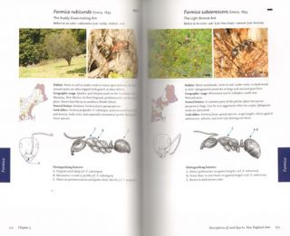 Field guide to the ants of New England.