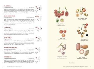 Australian rainforest fruits: a field guide.
