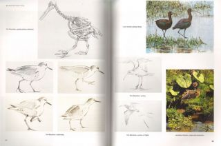 Drawing and painting birds.