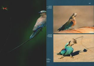 Handbook of the birds of the world [HBW], special volume: new species and global index.