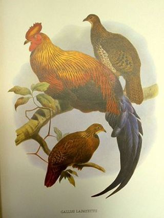 The birds of Daniel Giraud Elliot: a selection of pheasants and peacocks painted by Joseph Wolf and taken from the original monograph published in New York 1872.