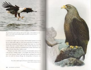 An eternity of eagles: the human history of the most fascinating bird in the world.