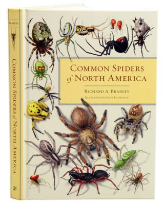 Common spiders of North America. Richard A. Bradley, Steve Buchanan.