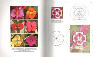 Hidden geometry of flowers: living rhythms, form and number.