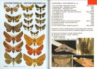 Moths of Victoria: part four, Emeralds and allies, Geometridae (B).
