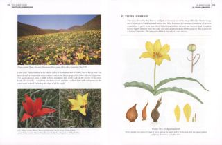 The Genus Tulipa: the tulips of the world.