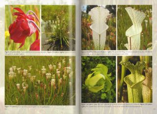 Field guide to the carnivorous plants of the United States and Canada.