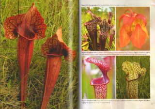 Field Guide to the pitcher plants of the United States and Canada.