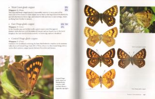 Butterflies of the South Pacific.