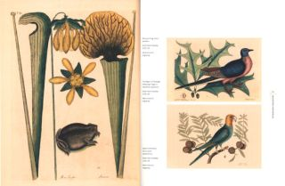 The art of science: remarkable natural history illustrations from Museum Victoria.