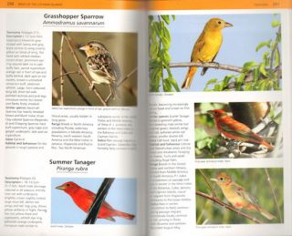 Photographic guide to the birds of the Cayman Islands.