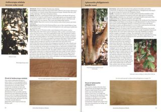 Australian rainforest woods: characteristics, uses and identification.