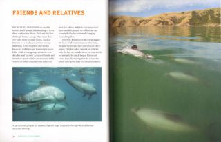 Dolphins down under: understanding the New Zealand dolphin.