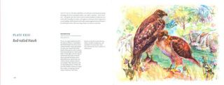 The art of migration: birds, insects, and the changing seasons in Chicagoland.