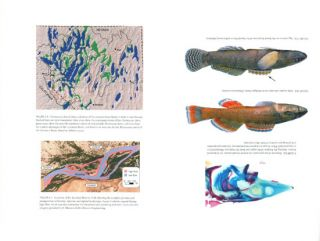 Ecology of North American freshwater fishes.