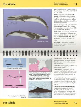 Guide to marine mammals of Alaska. Kate Wynne, Pieter Folkens.