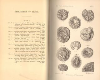 Catalogue of the fossil Bryozoa in the Department of Geology, volume two: the cretaceous Bryozoa.