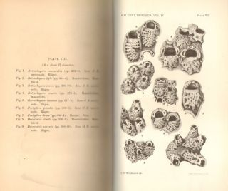 Catalogue of the fossil Bryozoa in the Department of Geology, volume four: the cretaceous Bryozoa (Polyzoa). The Cribrimorphs- part two.