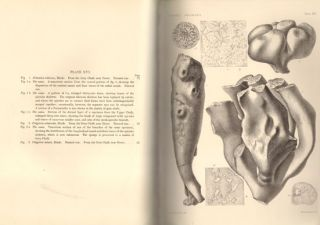 Catalogue of the fossil sponges in the Geological Department of the British Museum (Natural History). With descriptions of new and little-known species.