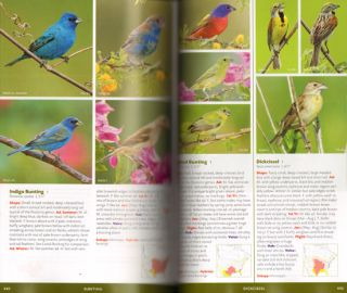 The new Stokes field guide to birds: eastern region.
