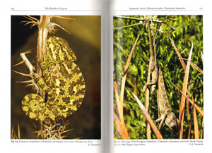 The amphibians and reptiles of Cyprus.