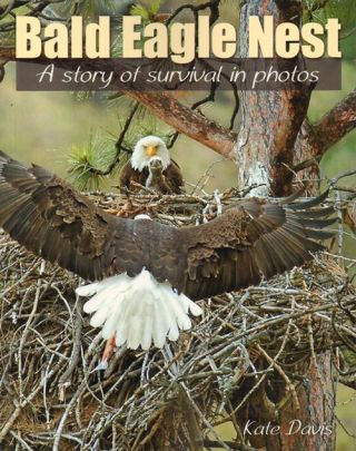 Bald eagle nest: a story of survival in photos. Kate Davis