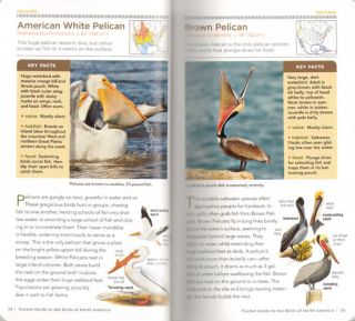 National Geographic pocket guide to the birds of North America.