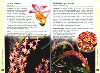 A guide to orchids of Kinabalu.