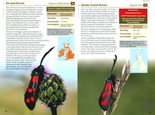 Britain's day-flying moths: a field guide to the day-Flying moths of Britain and Ireland.
