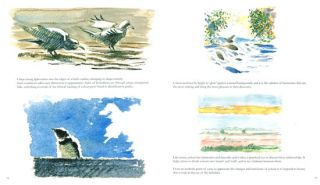 Looking at birds: an antidote to field guides.