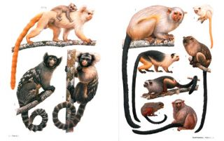Primates of the world: an illustrated guide.