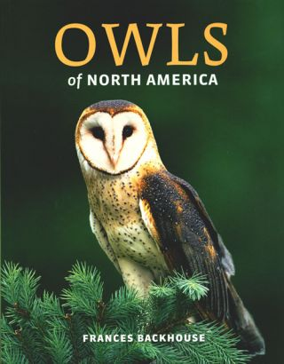 Owls of North America. Frances Backhouse