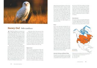 Owls of North America.
