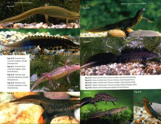 Amphibians and reptiles: ecology and identification.