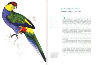 Extraordinary birds: essays and plates of rare book selections from the American Museum of Natural History Library.