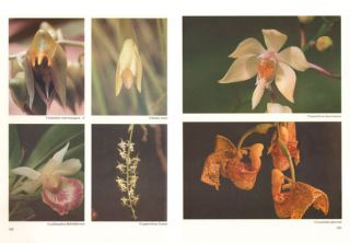 Orchids of Suriname.