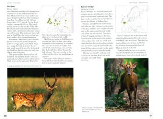 Tracks and signs of the animals and birds of Britain and Europe.