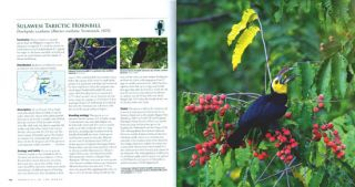 Hornbills of the world: a photographic guide.