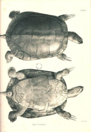 Catalogue of shield reptiles in the collection of the British Museum, part one: Testudinata (tortoises).