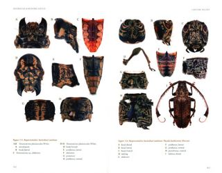 Australian longhorn beetles (Coleoptera: Cerambycidae) volume one: introduction and subfamily Lamiinae.