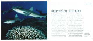 Sharks and people: exploring our relationship with the most feared fish in the sea.