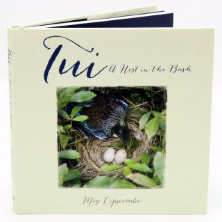 Tui: a nest in the bush. Meg Lipscombe.