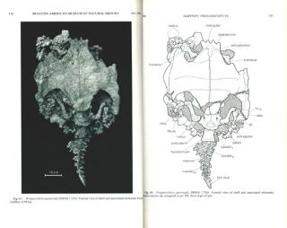 The comparative osteology of the Triassic turtle Proganochelys.