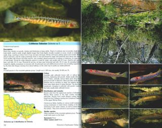 A pictorial guide to Victoria's freshwater fishes.