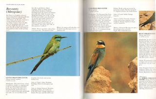 Inland birds of Saudi Arabia.