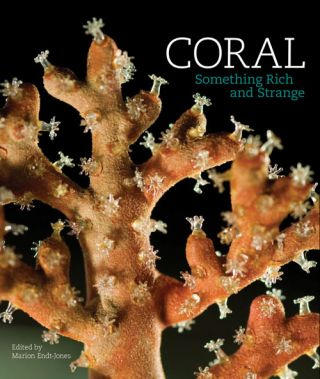 Coral: something rich and strange. Marion Endt-Jones