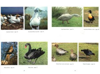 Birds of Tasmania: an annotated checklist with photographs.